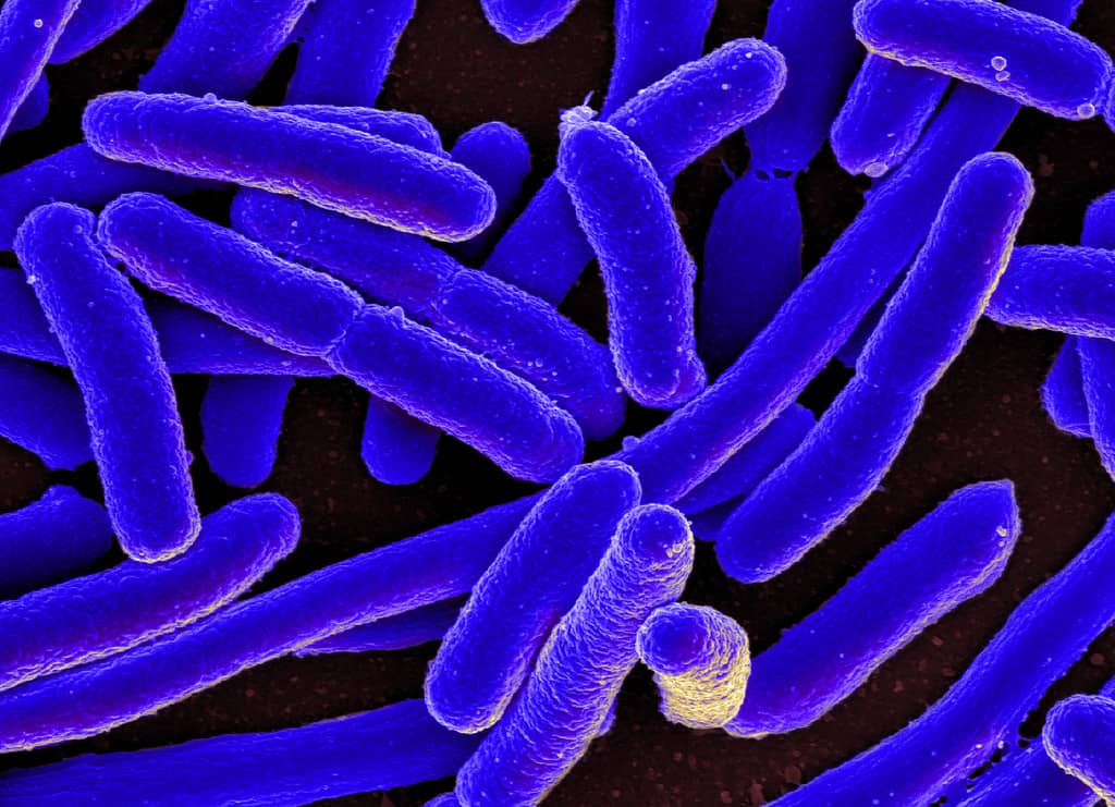 Weekly Digest: Bacterial tolerance may precede resistance; Should you finish your antibiotic prescription?